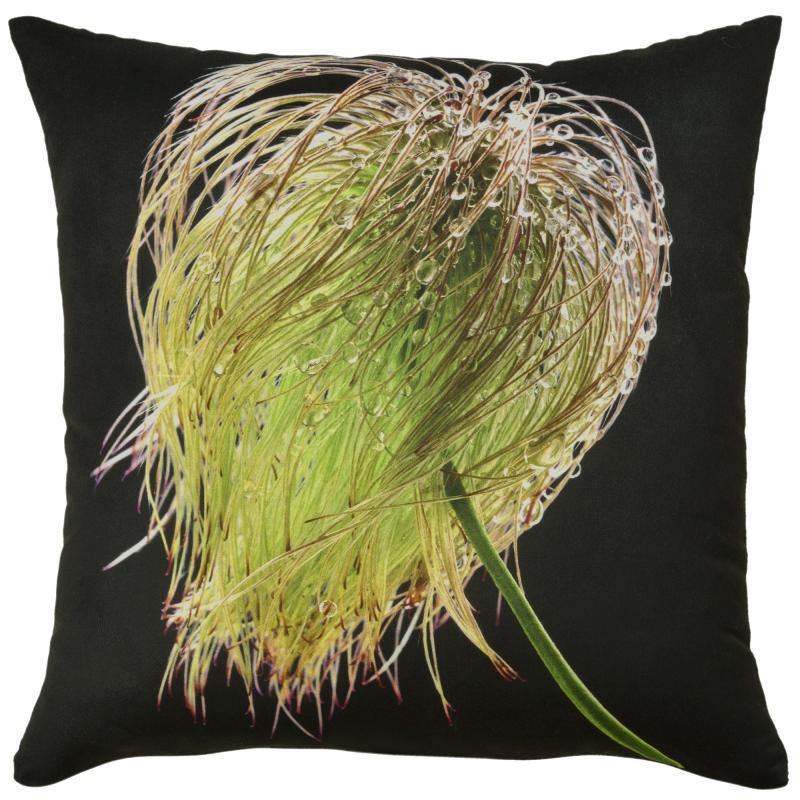 Botanicals - Clematis (Seed)