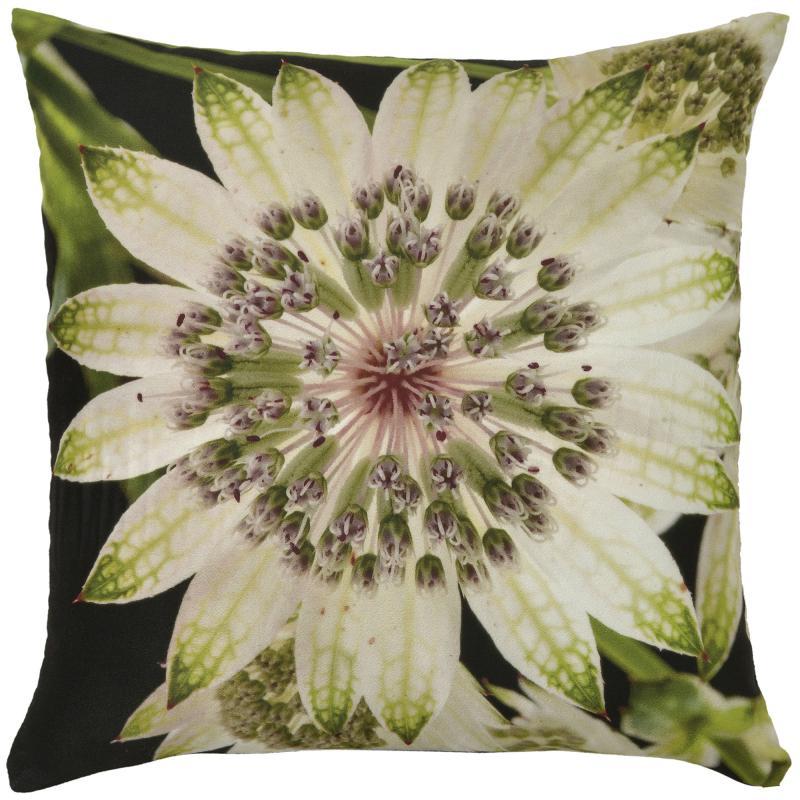 Botanicals - Passion Flower