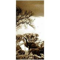 Elephant & Calf #142