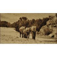 Elephants - 143