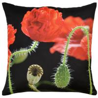 Botanicals - Poppies Vivid