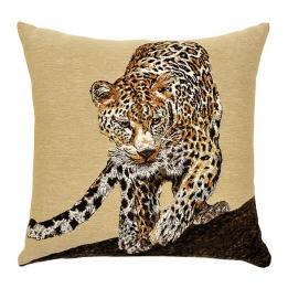 African - Leopard