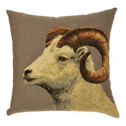 Ram, Argali Sheep - White Argali Ram