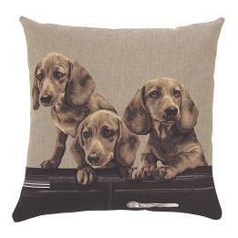 Convertible Dogs - Car Dachians