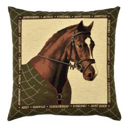 Horse Portraits - Bay Horse