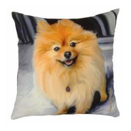 Pomeranian - Clearance Cushion