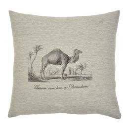Safari - Camel