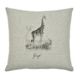 Safari - Giraffe
