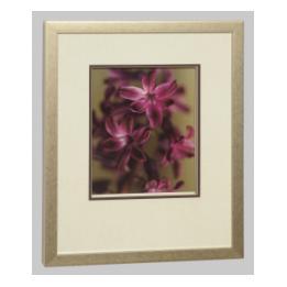 Technicolour Flowers - Hyacinth